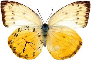 "Часы ""Бабочка желто-белая"""