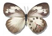 """Часы """"Бабочка серая"""""""