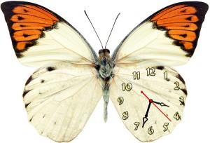 "Часы ""Бабочка белая с оранжевым"""