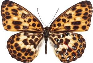 "Часы ""Бабочка леопардовая"""