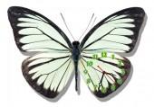 "Часы ""Бабочка белая с черным"""