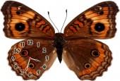 """Часы """"Бабочка коричневая"""""""