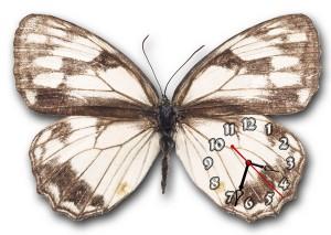 """Часы """"Бабочка серая 2"""""""