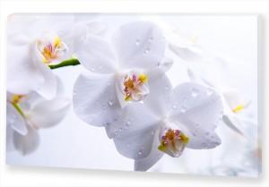 """Картина """"Белые Орхидеи"""""""