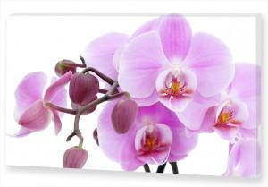 """Картина """"Розовая орхидея"""""""