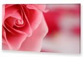 "Картина Роза"""