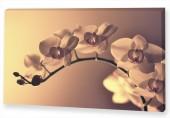 "Картина ""Орхидея 2"""