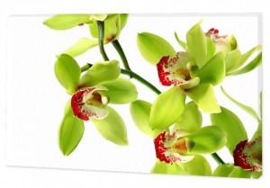 """Картина """"Зеленая орхидея"""""""