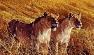 Львицы